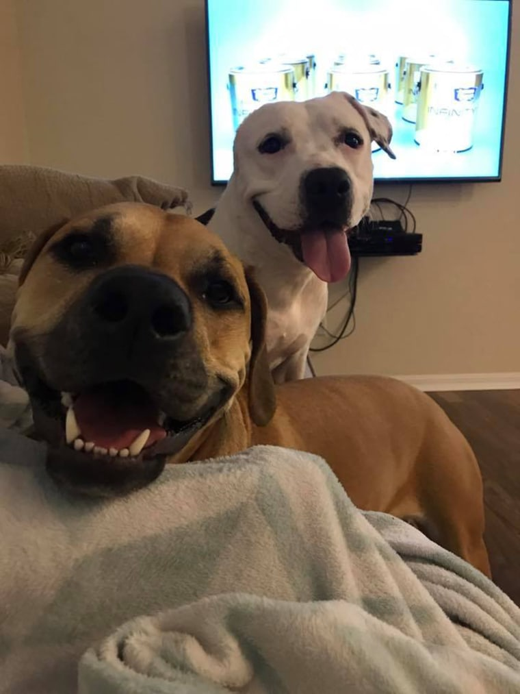 Abigail the pit bull, hero dog winner, with sister Tala