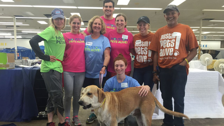 Renee Zellweger volunteered with Houston Pets Alive!