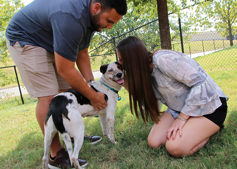 Dog abandoned by side of the road in Dallas is adopted