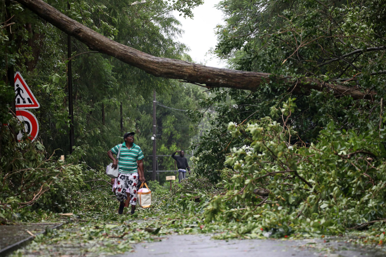 Image: A man looks at a fallen tree as he walks along a street after the passage of Hurricane Maria in Pointe-a-Pitre, Guadeloupe island