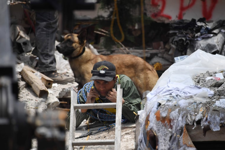 Image: A sniffer dog stands behind a rescue worker taking part in the search for survivors in Mexico City