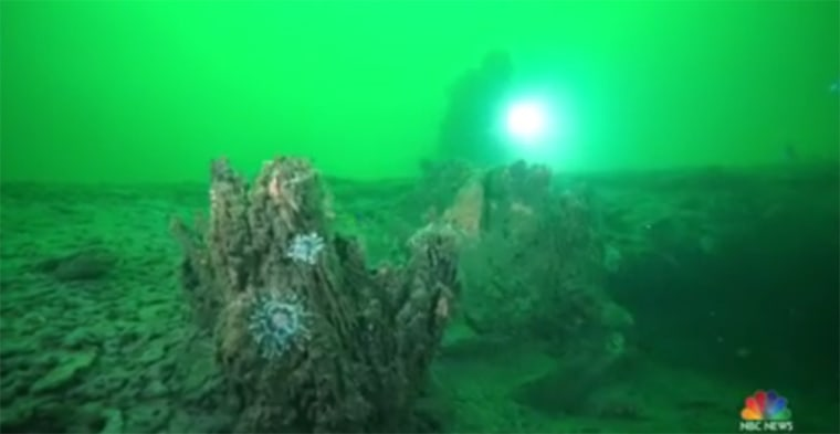 Image: Underwater forest along Alabama Coast