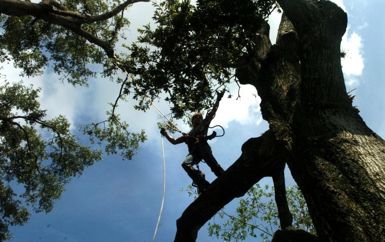 Image: Asplundh Tree Service