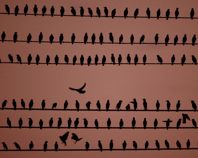 Image: Birds rest on power lines at dusk