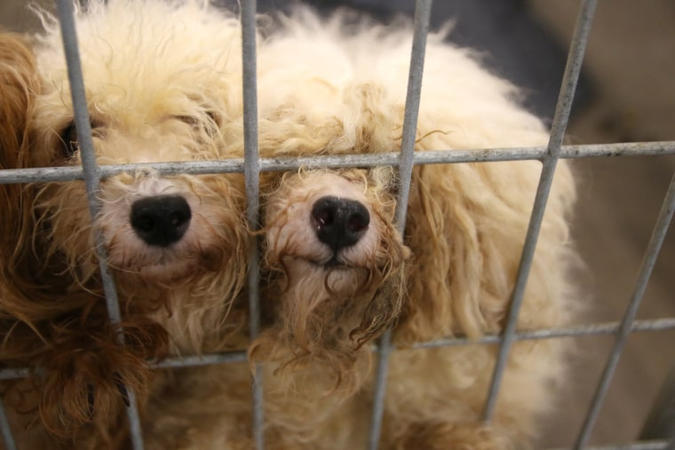 Puppy mill in North Texas
