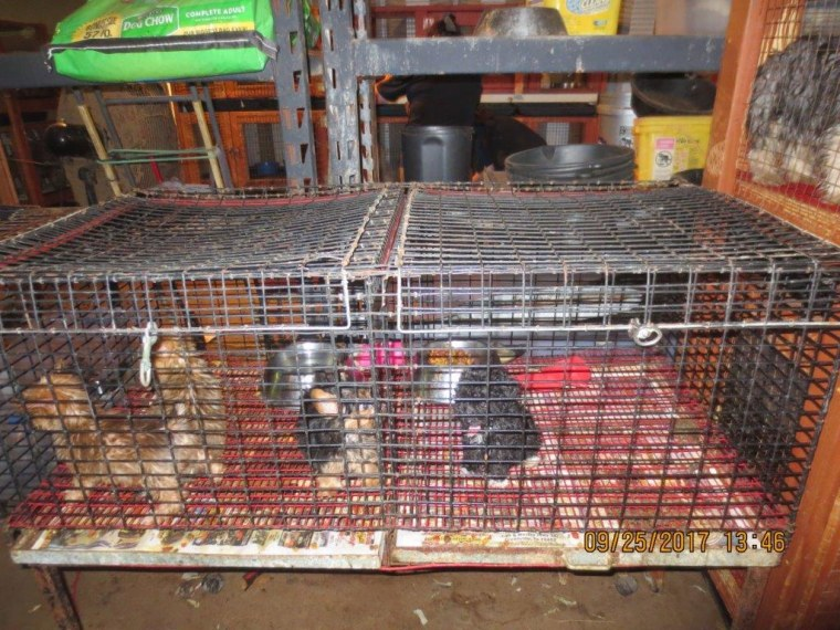 Texas puppy mill bust