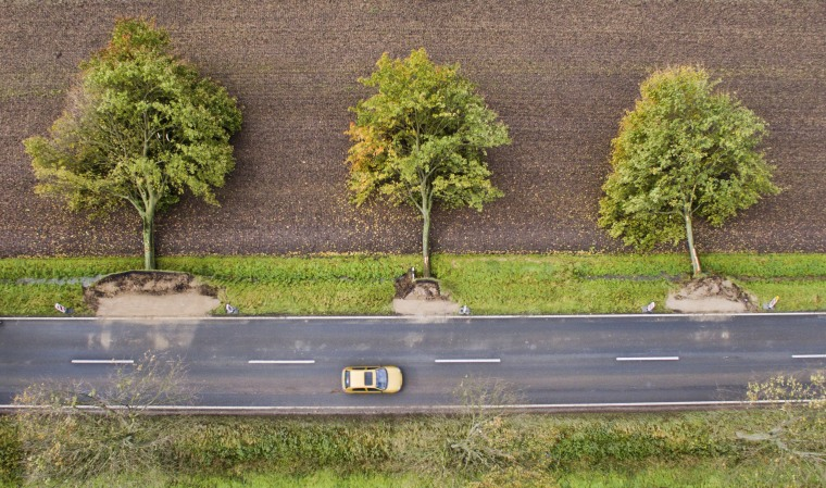 Image: The aerial view shows three uprooted trees at a road near Hildesheim