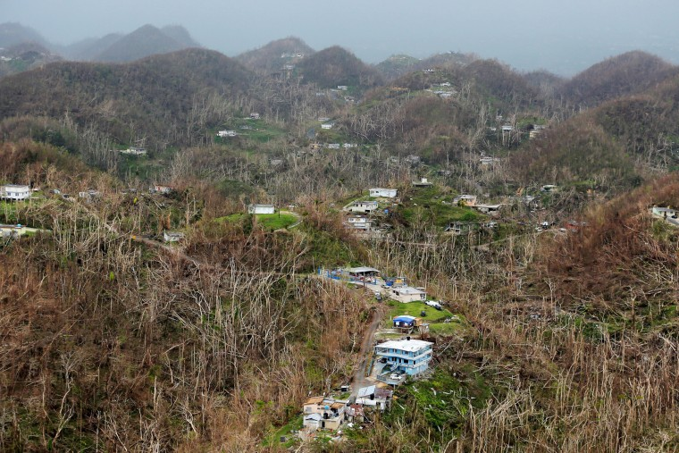 Image: Homes damaged by Hurricane Maria stand amid thousands of trees that have been exfoliated by Hurricane Maria in Puerto Rico