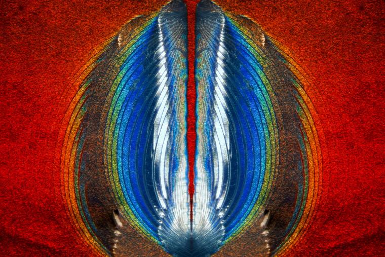 Steven Simon Simon Photography  Grand Prairie, Texas, USA  Plastic fracturing on credit card hologram