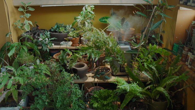 Closet garden