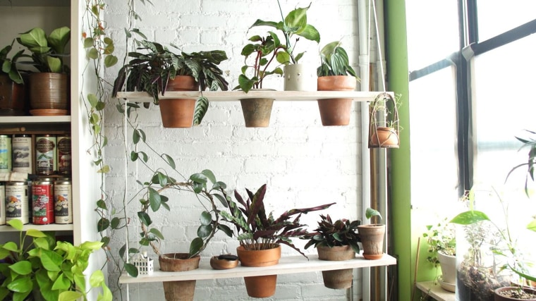 Summer Rayne Oakes Grows 670 Plants In Her Brooklyn Apartment