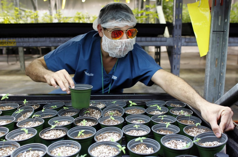 Image: Medical Marijuana In Puerto Rico