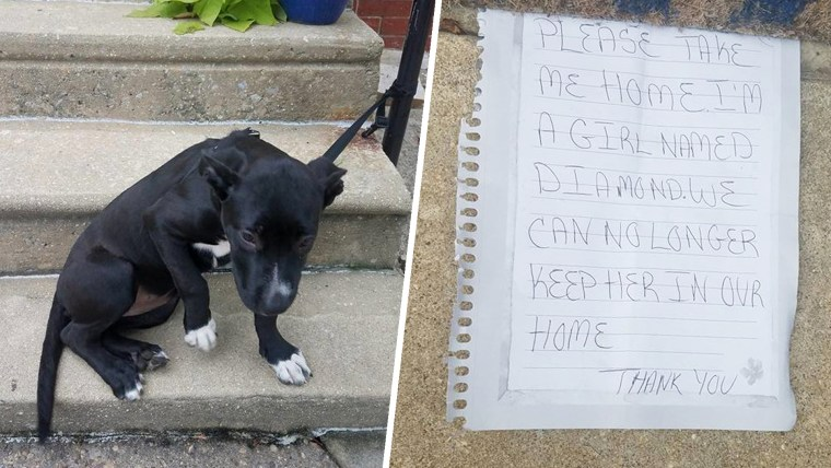 Puppy Abandoned with Note and Pizza Rescued by Philadelphia Facebook Group