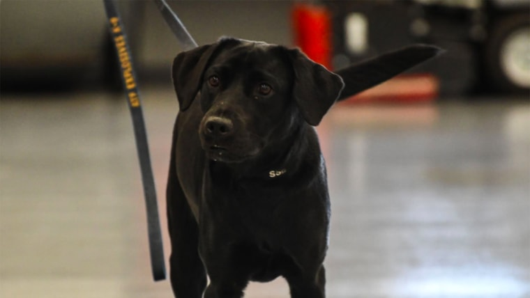 Lulu bomb-sniffing dog fired by CIA