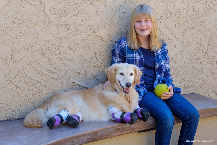 Dog with prosthetic paws now helps others