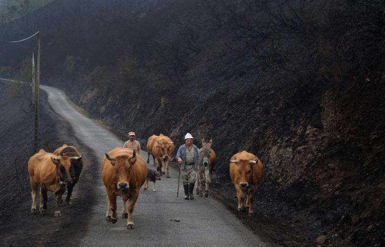 Image: Iberian Wildfires