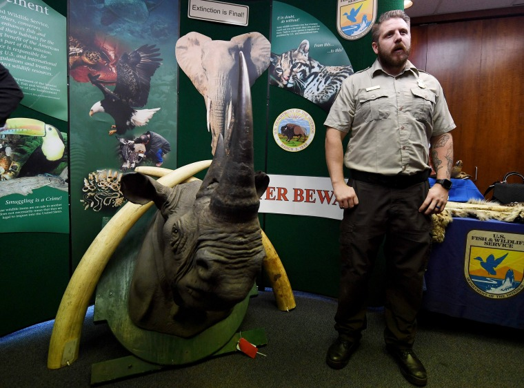 Image: A wildlife officer stands beside a stuffed and smuggled rhinoceros head during an Operation Jungle Book media event at the U.S. Fish and Wildlife Service in Torrance, California on Oct. 20, 2017.