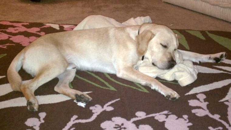 Dog loves his blanket