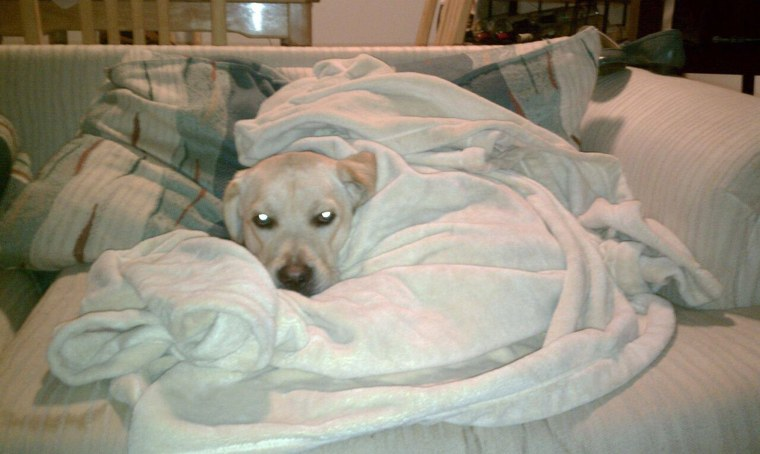 This dog and his favorite blanket have a longstanding love story