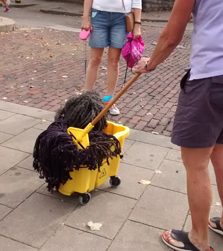 Dog is mop for Halloween