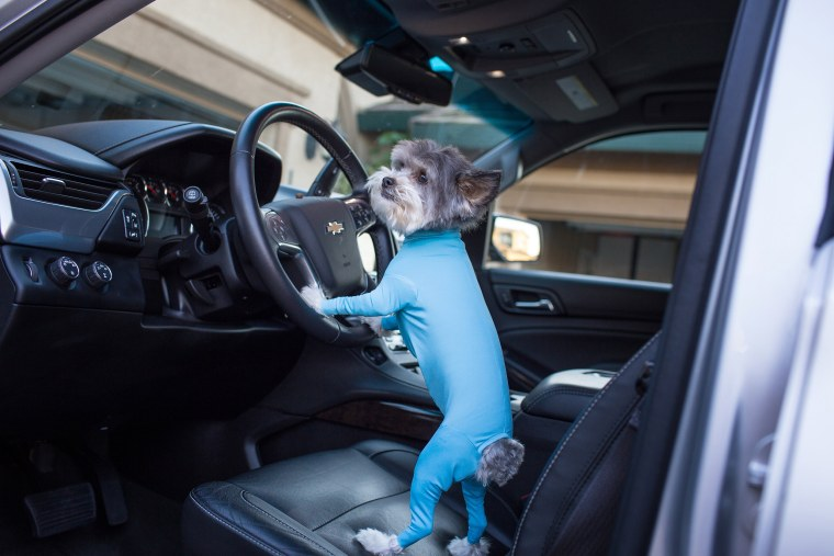 Dog leotards can keep your car clean and make your dog look even more ridiculously cute.