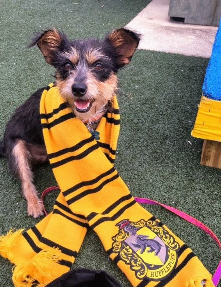 The Pet Alliance of Greater Orlando began sorting dogs into Hogwarts houses to display their personalities, not their breeds.