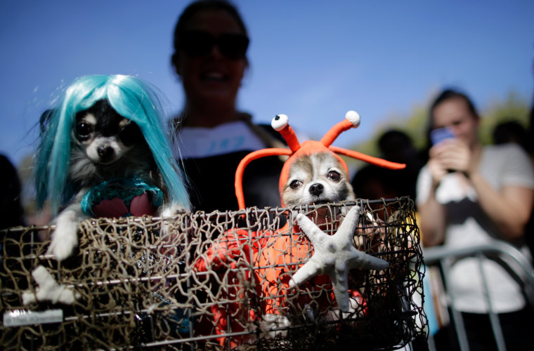 Image: Dogs in Halloween costumes attend the Annual Tompkins Square Halloween Dog Parade on Oct. 21 in New York.