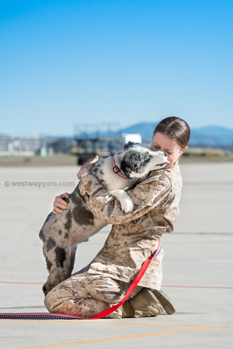 Dogs on Deployment helps take care of pets while military personnel are deployed