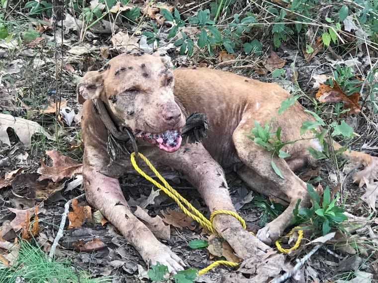Dog Rescues In Mississippi