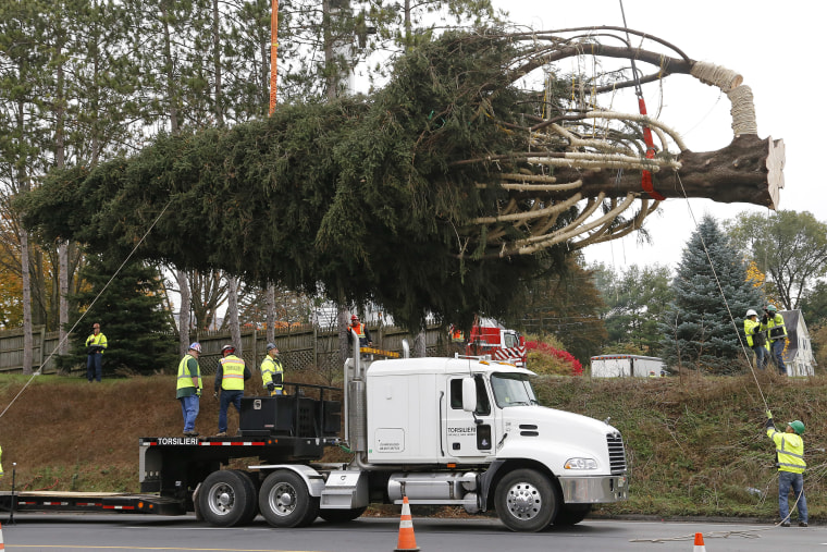 On Thursday the Pennsylvania tree was cut and readied for a road trip to the big city.