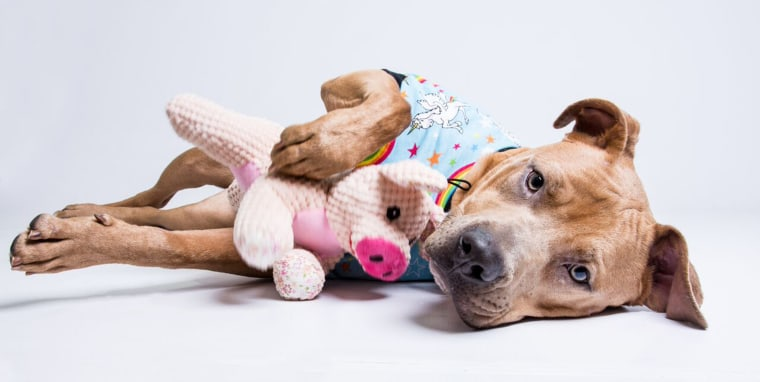 With holiday sleepovers, shelter dogs get great Thanksgivings, too!