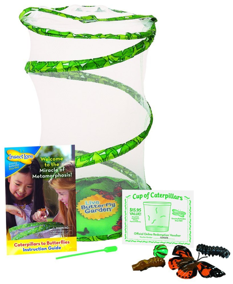 Insect Lore Giant Butterfly Kit