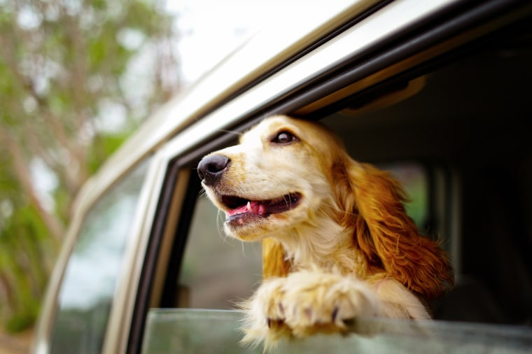 Image: Dog at Car WIndow