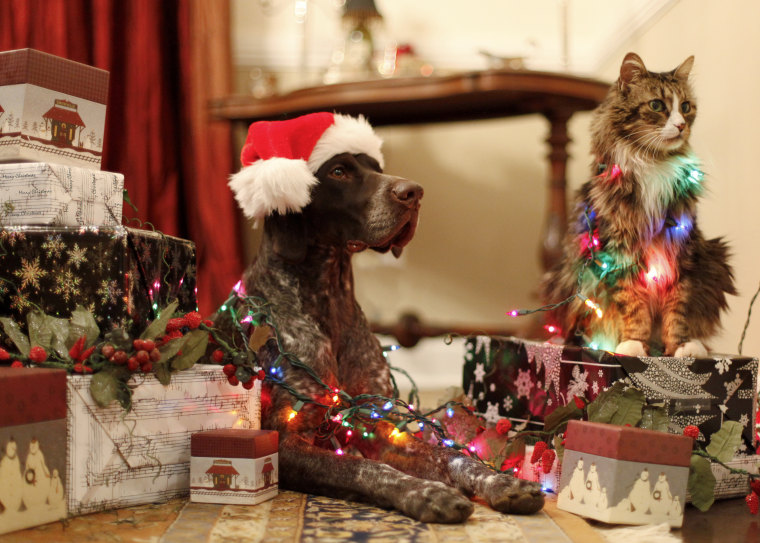 Image: Max the cat and Branston the pointer wait patiently to open gifts.