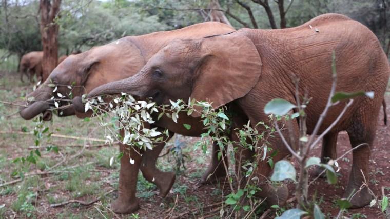 Image: Elephants in Nairobi's National Park