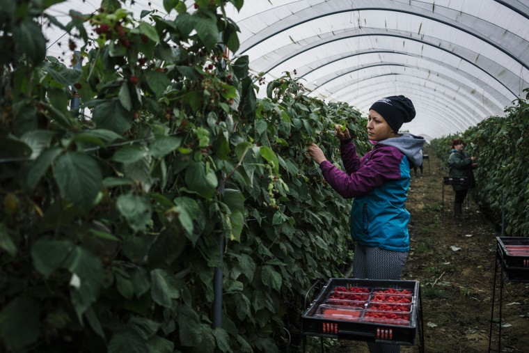 Image: Bulgarian fruit picker Elena Hoola