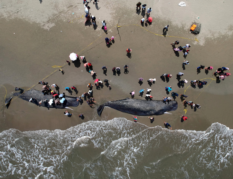 Image: Locals gather around two sperm whale carcasses at a beach in Banda Aceh