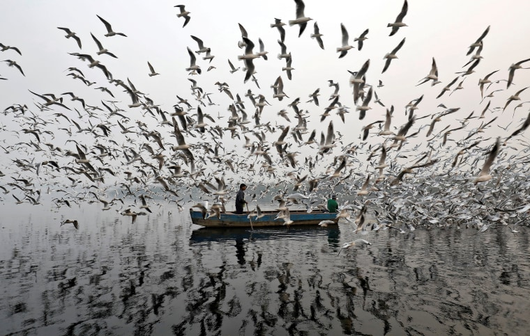 Image: Men feed seagulls along the Yamuna river on a smoggy morning in New Delhi