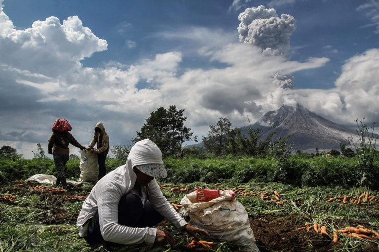 Image: Indonesian farmers work in a field as Moung Sinabung volcano spews thick smoke