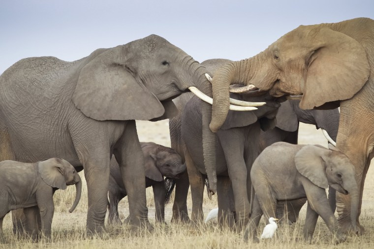 Image: Trump to Allow Elephant Trophies Brought to the US
