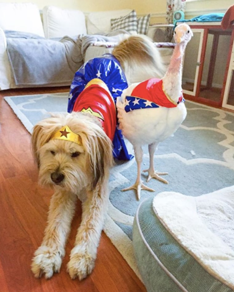 Rescue dog and rescue turkey are the best of friends