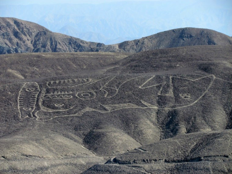 A recently rediscovered geoglyph of a sperm whale with human features in the deserts of Nazca in Perú.