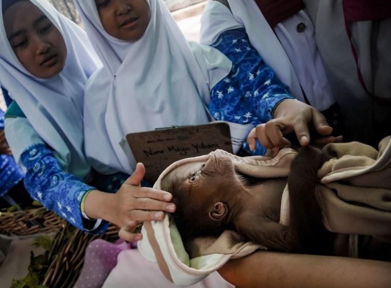 Image: INDONESIA-ORANGUTAN-BORN