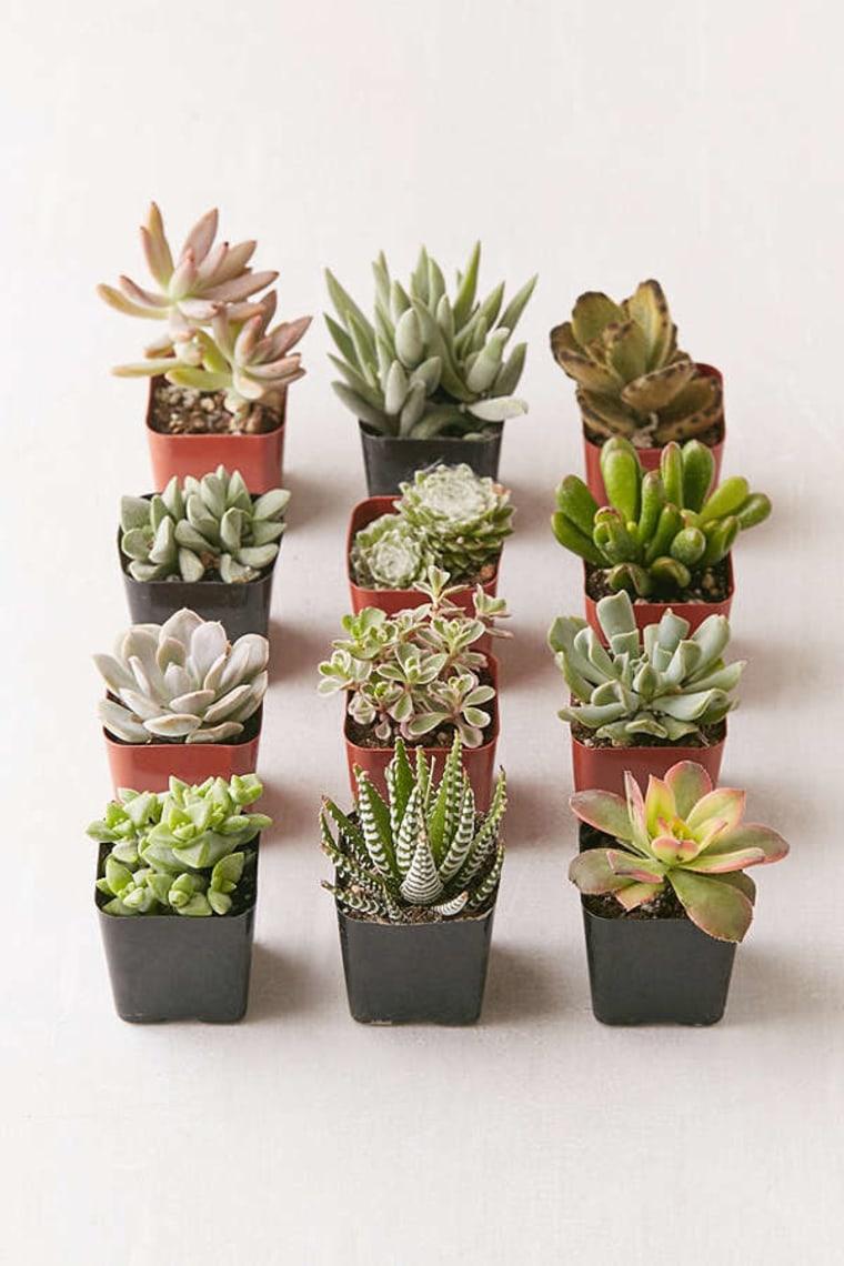 Assortment of live succulents