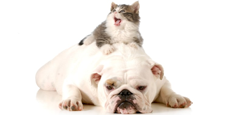 Dog and surprised cat.