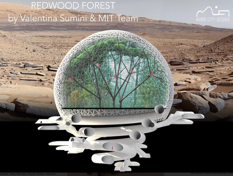 """Image: """"Every tree habitat in Redwood Forest will collect energy from the sun and use it to process and transport the water throughout the tree, and every tree is designed as a water-rich environment,"""" says winning team member Geroge Lordos MBA '00."""