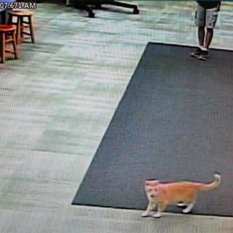 Max the cat is banned from the library