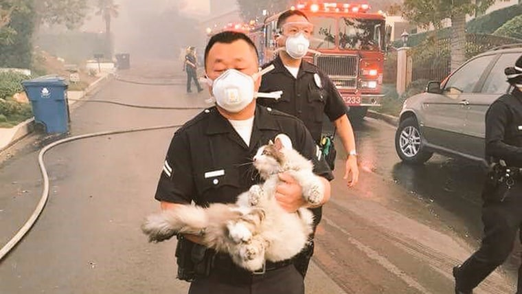 LAPD Officer Tae Kim carries a cat he found while helping evacuate a neighborhood affected by the Skirball Fire.
