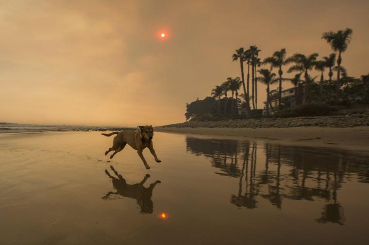 Image: A smoke-filled sky filters orange light around a dog on the beach