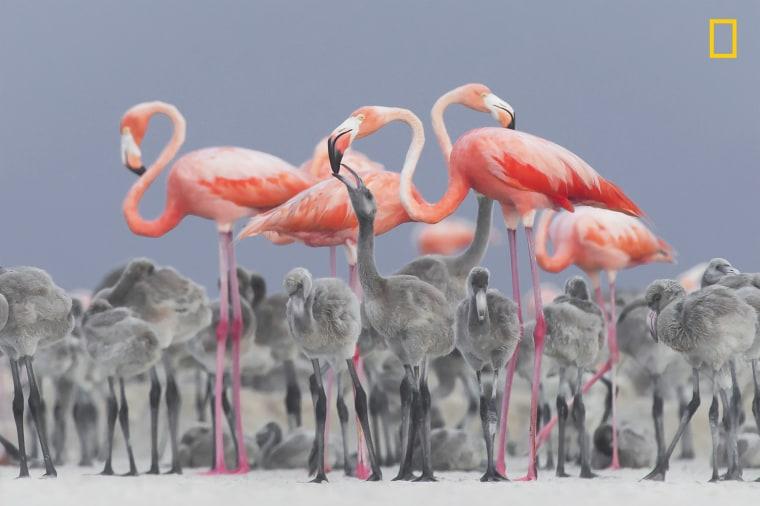 Image: 2nd Place, Wildlife